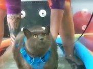 22斤肥猫跑步机减肥很可爱,但背后的故事很糟心