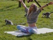 好可爱!英国饭店引进狐猴和人类一起做瑜伽