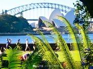 好大只的多肉植物!悉尼皇家植物园探秘