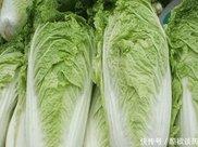 常吃白菜,具有防癌抗癌,减肥健美,冬天吃还治感冒