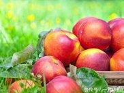 怀孕后可以吃油桃吗需要注意什么