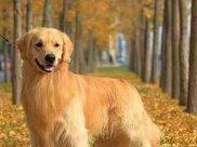 狗狗补钙不是小事,钙片随意吃问题不小,这些要点不能不注意!