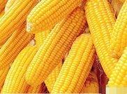 吃玉米可以减肥吗?说出来你都不一定会信,涨知识了!
