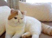 猫主食罐头会吃胖吗,橘猫只吃主食罐会吃胖吗