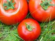 减肥试试西红柿减肥法 7天瘦7斤