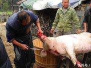 在农村很多人常年吃猪油,到底是健康还是有害?答案来了