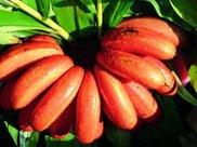 """一旦体重过百,4种水果碰不得,热量高不说,比吃肉还""""长肉""""!"""