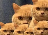 为了给橘猫减肥控制食量,主人买了自动喂猫器,结果笑喷了