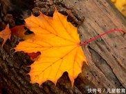玲珑灸减肥:秋天减肥别再吃黄瓜了,艾灸让你在这个秋天瘦下来