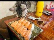 网友买了三文鱼寿司回来,猫看到后急得都站起来了:快给我吃!