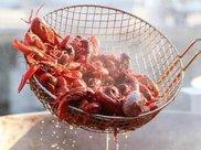 小龙虾火爆,国人一年吃小龙虾可绕赤道3圈,小龙虾为啥那么猛?