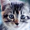 恋尚猫用户头像