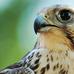 相关鸟类 - 草根花农 - 得之淡然、失之泰然、顺其自然、争其必然
