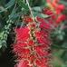 相关植物 - 草根花农 - 得之淡然、失之泰然、顺其自然、争其必然