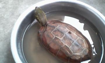乌龟的种类及名称 360问答
