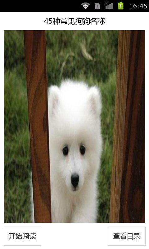 宠物狗图片和名字_狗狗品种名字及图片图片展示_狗狗品种名字及图片相关图片下载