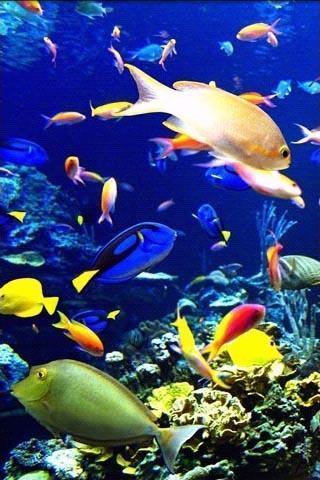 海底世界壁紙_360手機助手