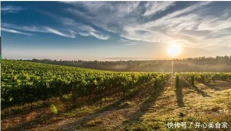 容易栽培的果樹葡萄,關于葡萄的最佳種植攻略,小編帶你來看看!