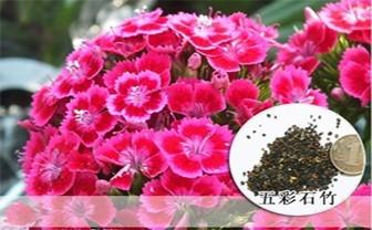 【复制】绝招治愈帕金森氏病手抖! - 周公乐 - xinhua8848 的博客
