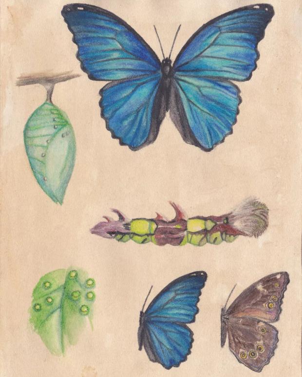 蓝闪蝶特征(最好详细点)(图14)