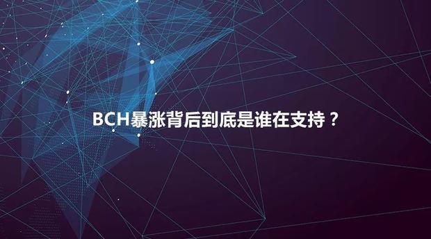 谁在bch后面支持?