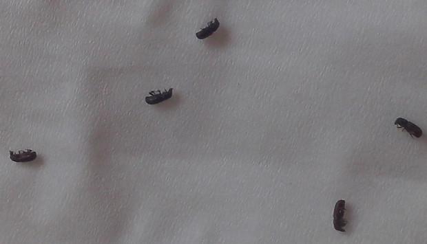 牙里的虫子长什么样_木头蛀虫图片牙蛀虫图片 牙齿蛀虫图片