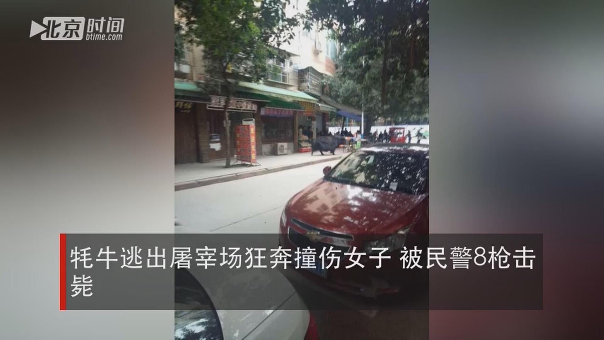 四川影视文艺直播_牦牛逃出屠宰场狂奔撞伤女子 被民警8枪击毙