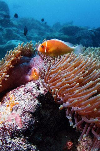熱帶魚 海底世界 安卓手機高清壁紙推薦