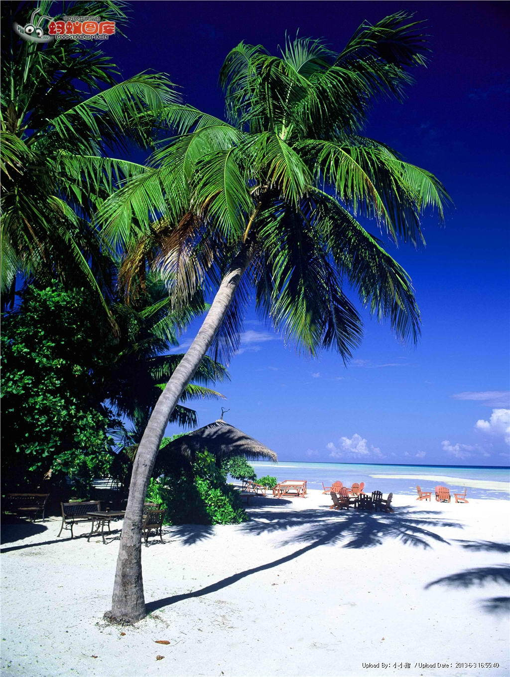 2k椰子樹風景豎屏壁紙