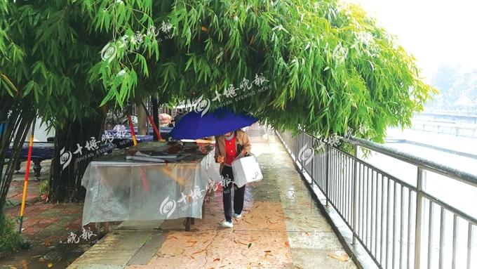 """""""竹子挡路的情况已经很久了,特别是下雨天很不方便,有些行人只能硬着"""