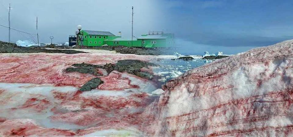 """南极出现""""西瓜雪"""",科学家:这不浪漫还可能很危险"""