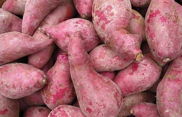 红薯的功效与作用