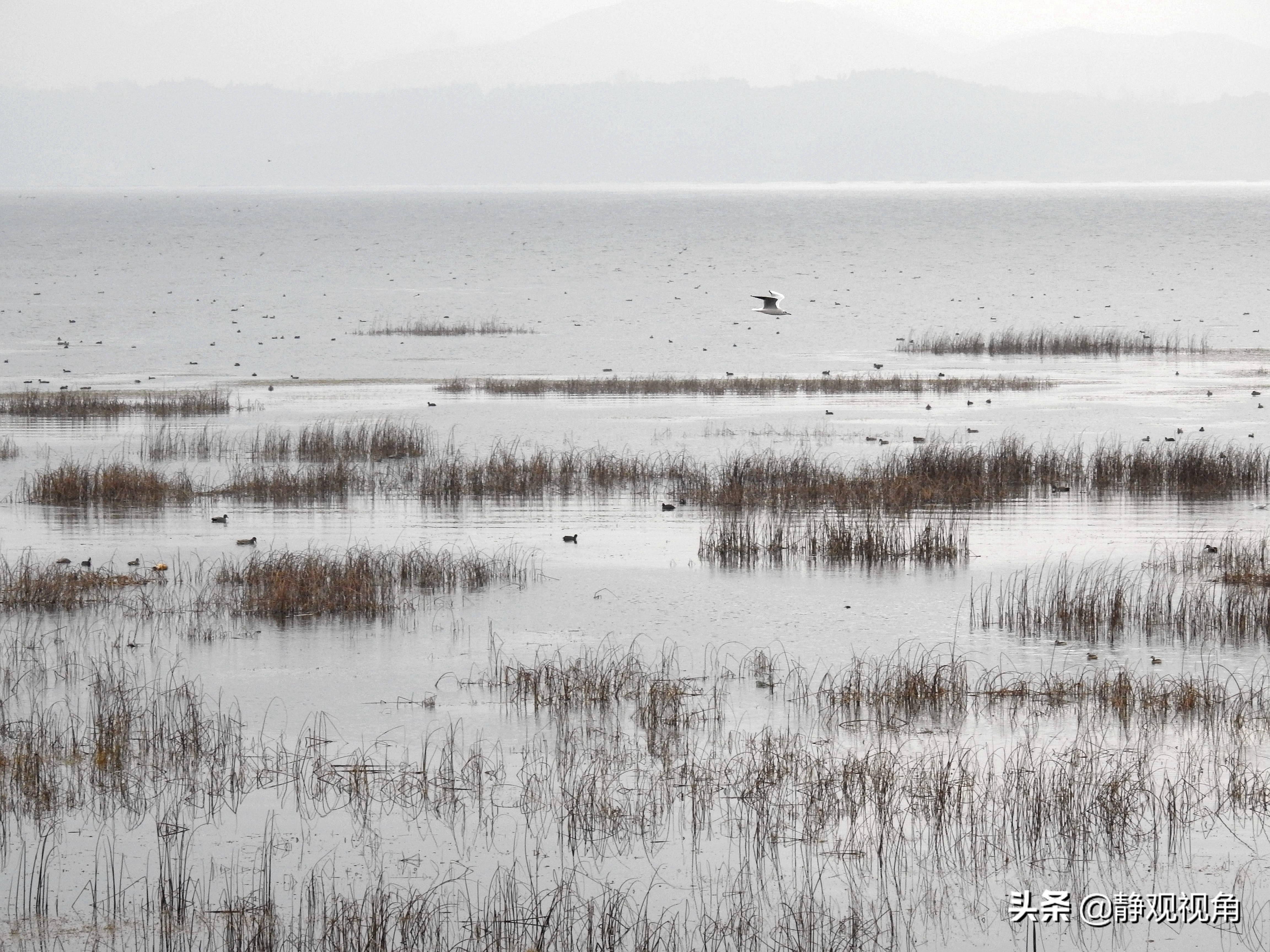 贵州威宁湿地草海别样美