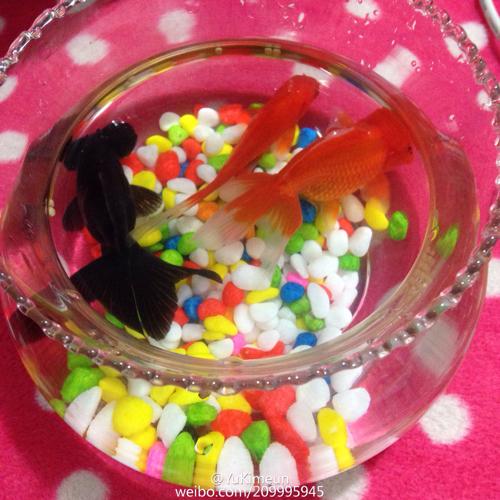 我家金鱼露出水面呼吸是不是缺氧了 我们是小