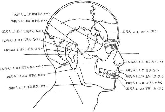 口裂点 口裂点stomion(简称sto)上,下唇闭合时,口裂的正中点 词条标签... 口裂点_