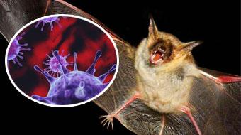 蝙蝠为什么能传播疾病