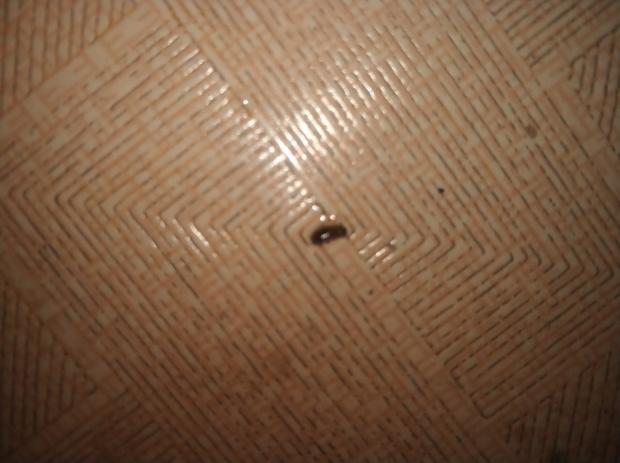 有两条触须,在潮湿的屋子里面,不会飞